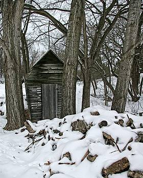 Shed In The Woods by Tom Reynen