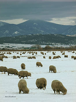 Kae Cheatham - Sheep on Winter Field
