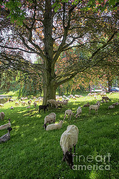 Patricia Hofmeester - Sheepherd in a park in Groningen, city