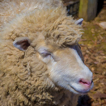 Sheepish by Lee Fortier