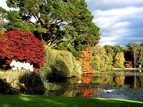 Sheffield Park by Nicola Butt