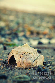 Shell at Bowers 2 Nature Photograph by Melissa Fague