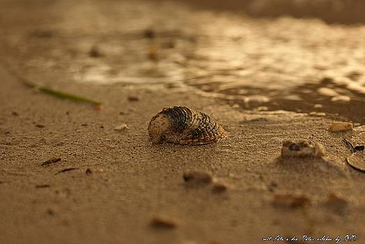Shell  by Olivia Narius