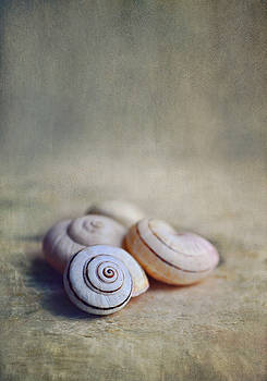 Shell Still Life by Lyn Randle