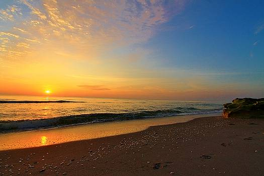 Shells and Sunrise by Catie Canetti