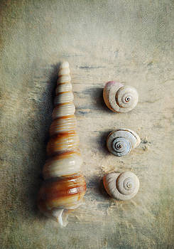Shells on beach wood by Lyn Randle