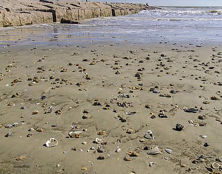 Allen Sheffield - Shells on the Beach