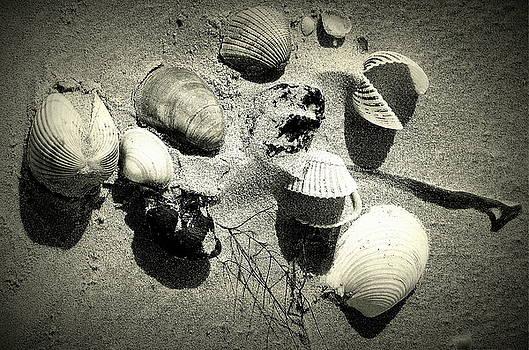 Rosanne Jordan - Shells on the Beach