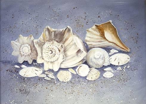 Shells by Sue Coley