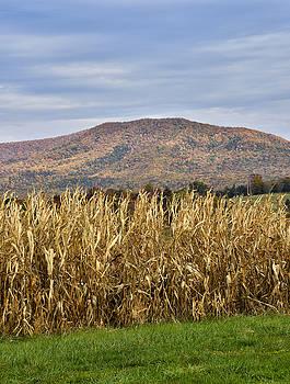 Shenandoah Valley - Fall Scene - Virginia by Brendan Reals
