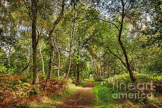 Sherwood Forest, England by Colin and Linda McKie