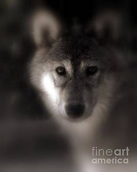 Shewolf by Steve Patton