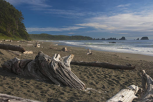 Shi Shi Beach Driftwood Afternoon by Scott Cunningham