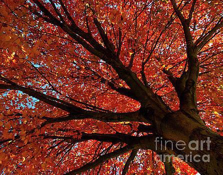 Shimmering Orange Nature Photograph by Melissa Fague