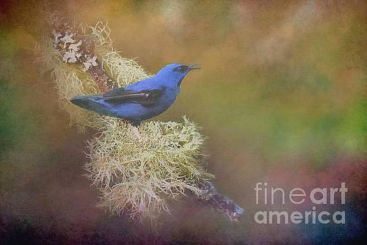 Shining Honeycreeper by Janette Boyd