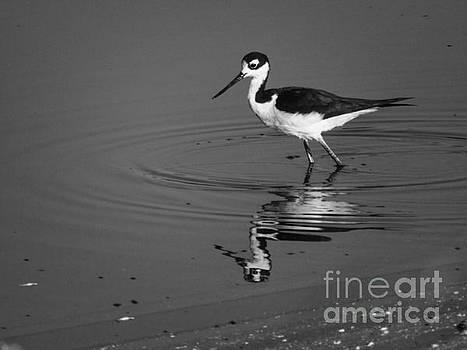 Shorebird BW by Rrrose Pix