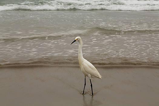 Shoreline Egret by John Daly