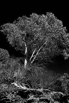 Shoreline Tree by Roger Mullenhour