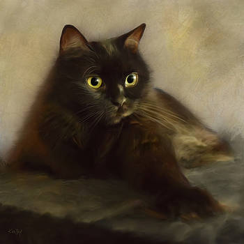 Shorty by Johanne Dauphinais