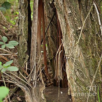 Shredded Tree by Carol Lynn Coronios