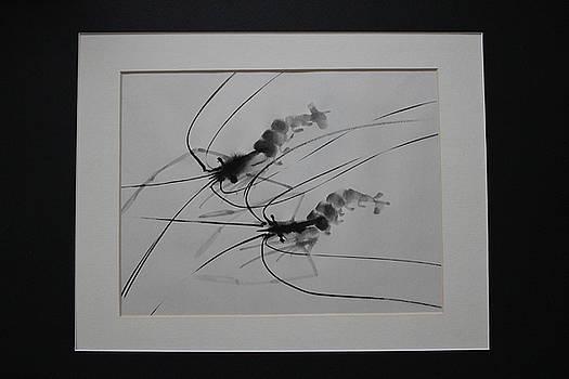 Shrimp i by Tom Lee