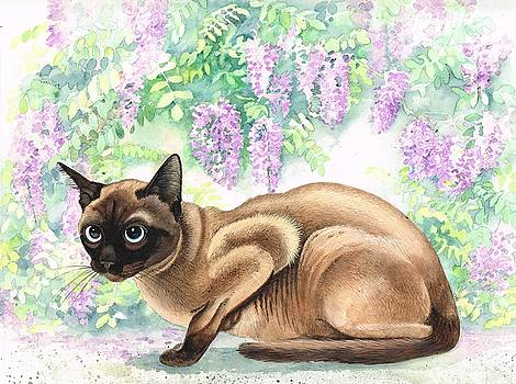 Siamese cat by Val Stokes