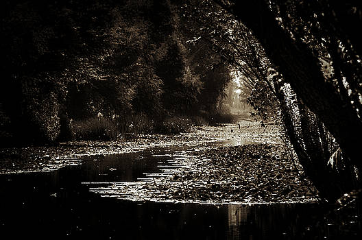 Side Canal in Xochimilco Sepia by David Resnikoff