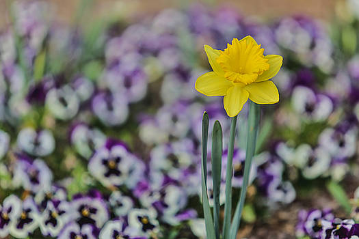 Signs of Spring by Jimmy McDonald