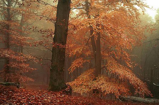 Jenny Rainbow - Silence In Misty Woods