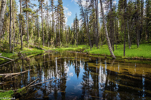 Silent Creek by Mike Ronnebeck