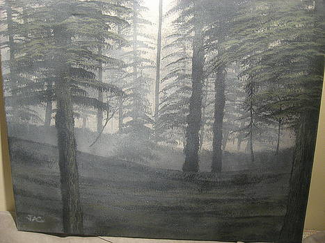 Silent Forest by Jim Carreau