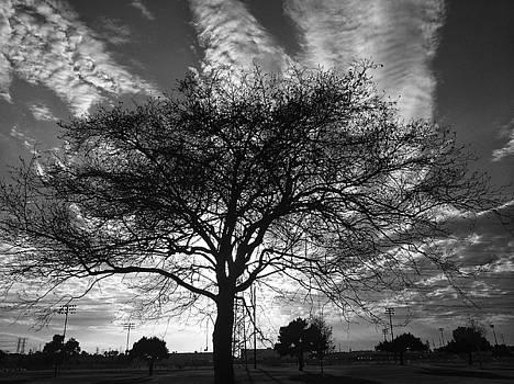 Silhouette IV  by Mark DeJohn
