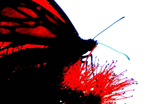 Silhouette Monarch with Red by Laurie Pike
