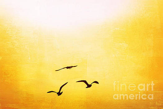 Silhouetted Seagulls at Sunset by Kelly Nowak