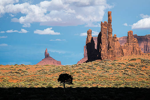 Mary Lee Dereske - Silhouetted Tree at Monument Valley