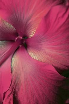 Silk Flower by The Art Of Marilyn Ridoutt-Greene