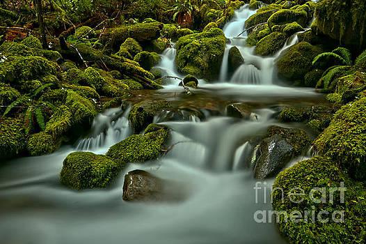 Adam Jewell - Silk In The Rainforest
