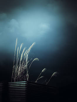 Silver Grass Lightning by Rachel Mirror