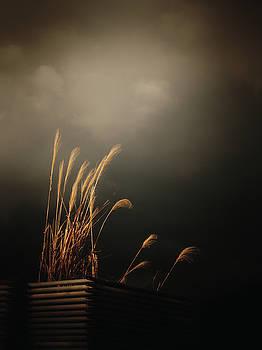 Silver Grass by Rachel Mirror