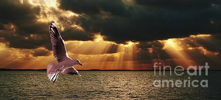 Silver Gull and God Clouds - Sunset at Sea.Original east Australian photo art. by Geoff Childs