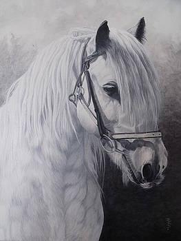 Silver-Gypsy Cob by Pauline Sharp