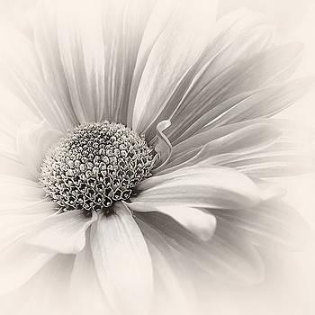 Silver Mist by Darlene Kwiatkowski
