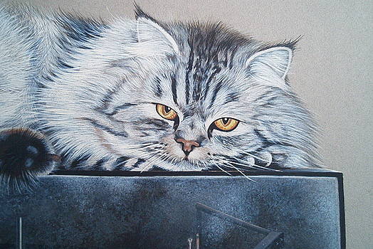 Silver Tabby Persian by Andrea Ellwood