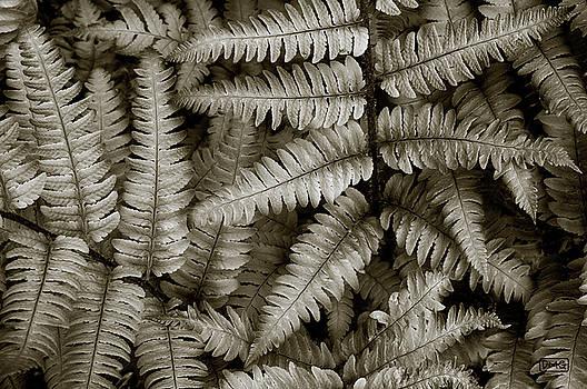 Dave Gordon - Silvery Ferns