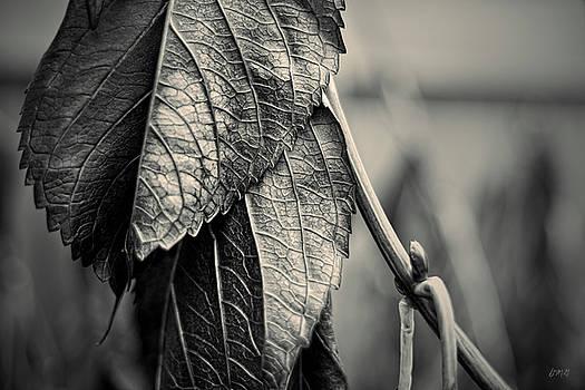 David Gordon - Silvery Leaf III Toned