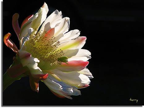 Simple Splendor by Terry Temple