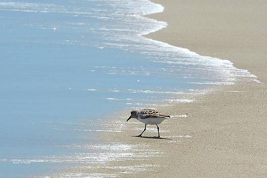 Simplicity of A Beach's Beauty by Sandi OReilly