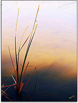 Simplicity by Terry Temple