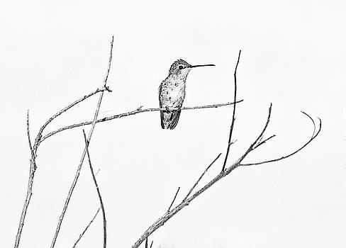 Simply a hummingbird by Ruth Jolly