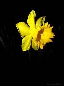 Joyce Dickens - Simply Daffodil